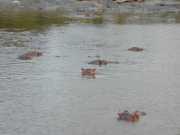 hippo2c