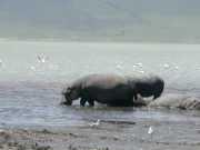 hippo3d