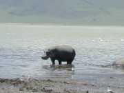hippo3e