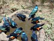 oiseau2a
