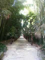 bambouseraie_18_06-10