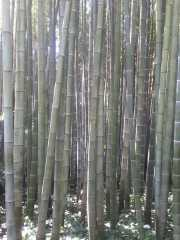 bambouseraie_18_06-11