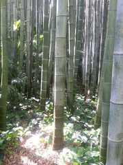 bambouseraie_18_06-12