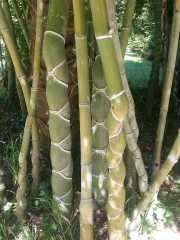 bambouseraie_18_06-13
