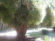 bambouseraie_18_06-14