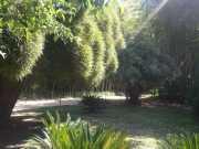 bambouseraie_18_06-15