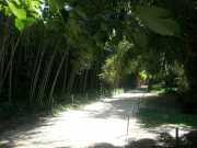 bambouseraie_18_06-16