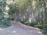 bambouseraie_18_06-17