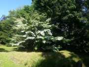 bambouseraie_18_06-19