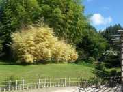 bambouseraie_18_06-22