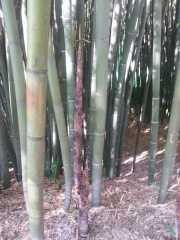 bambouseraie_18_06-3