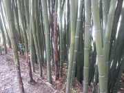 bambouseraie_18_06-4