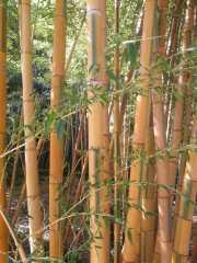 bambouseraie_18_06-5