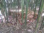bambouseraie_18_06-51