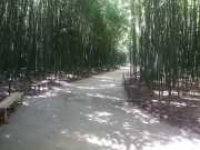 bambouseraie_18_06-52