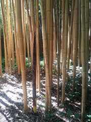 bambouseraie_18_06-56