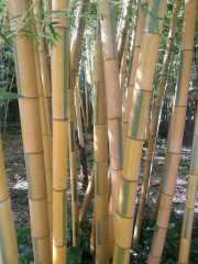 bambouseraie_18_06-6