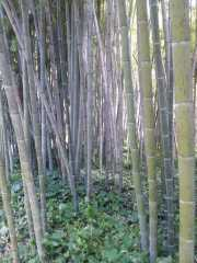 bambouseraie_18_06-64