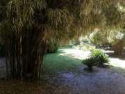 bambouseraie_18_06-65