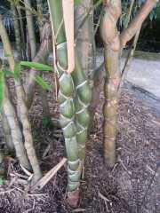 bambouseraie_18_06-66
