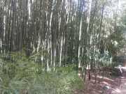 bambouseraie_18_06-8