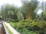 bambouseraie_18_06-88