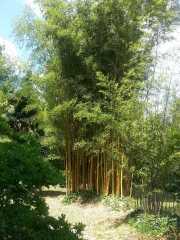 bambouseraie_18_06-91