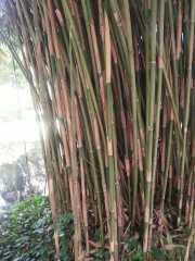 bambouseraie_18_06-92
