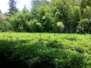 bambouseraie_18_06-93