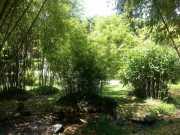 bambouseraie_18_06-96