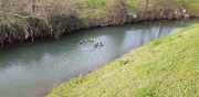 19_01_13_Lunel_Canal-17